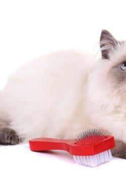 """חלמתי על חתול שפתאום צועק עלי """"תסתמי"""""""