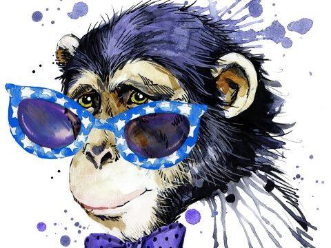הקופים