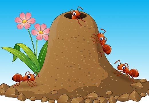 הנמלים