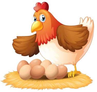 תוך כמה ימים מתחיל האפרוח להיווצר בביצה?