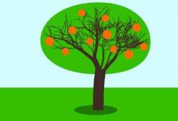 בירכתי בטעות בורא פרי אדמה על תפוז, מה אני עושה ?